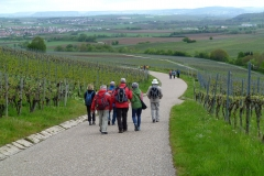 14-Weinbergweg-nach-Brackenheim